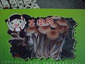 新社百菇莊:IMGP3157.JPG
