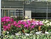 世界之美~蝴蝶蘭:DSCF1019.JPG