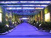 2010 台北花卉博覽會(台北小巨蛋) 花都:RIMG1112.JPG