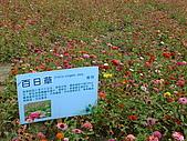 2009 嘉義市 花海節:DSCF1298.JPG