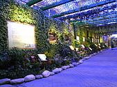 2010 台北花卉博覽會(台北小巨蛋) 花都:RIMG1119.JPG