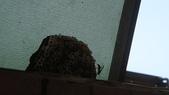 未分類相簿:窗外的蜂窩