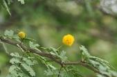 官田水中植物:DSC_1981aa.jpg