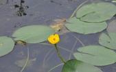官田水中植物:DSC_1966-a.jpg