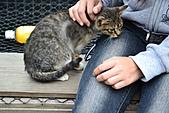 人與貓不可思議的邂逅:DSC_0167.JPG