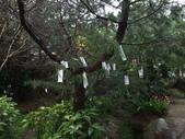 花的世界──桃園仙谷:DSCF1654.JPG