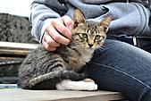 人與貓不可思議的邂逅:DSC_0169.JPG