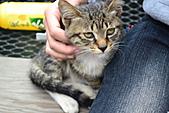 人與貓不可思議的邂逅:DSC_0170.JPG
