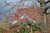 京都----楓紅...賞楓:DSC_0187.JPG