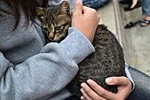人與貓不可思議的邂逅:DSC_0178.JPG