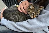 人與貓不可思議的邂逅:DSC_0179.JPG