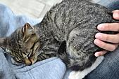 人與貓不可思議的邂逅:DSC_0182.JPG