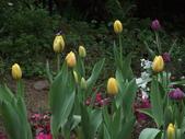 花的世界──桃園仙谷:DSCF1667.JPG