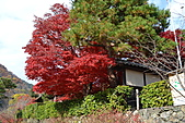 京都----楓紅...賞楓:DSC_0140.JPG