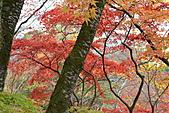 京都----楓紅...賞楓:DSC_0215.JPG