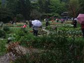 花的世界──桃園仙谷:DSCF1669.JPG