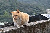 猴洞...貓村..貓:DSC_0048.JPG