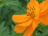 花-------蜂:DSCF0772.JPG
