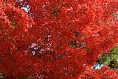 京都----楓紅...賞楓:DSC_0144.JPG