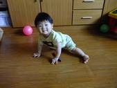 家裡的新成員澄澄:DSCF2772.JPG