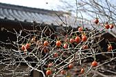 京都----楓紅...賞楓:DSC_0188.JPG