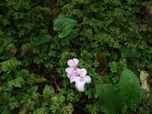 花的世界──桃園仙谷:DSCF1650.JPG
