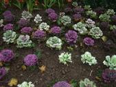 花的世界──桃園仙谷:DSCF1661.JPG