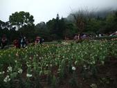 花的世界──桃園仙谷:DSCF1675.JPG