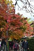 京都----楓紅...賞楓:DSC_0178.JPG