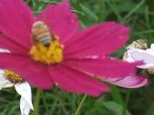 花-------蜂:DSCF0809.JPG