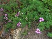 花的世界──桃園仙谷:DSCF1662.JPG