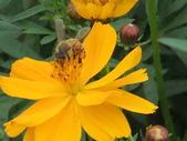 花-------蜂:DSCF0773.JPG