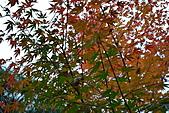 京都行(二):DSC_0258.JPG