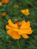 花-------蜂:DSCF0774.JPG