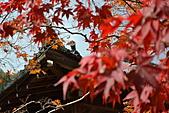 京都----楓紅...賞楓:DSC_0193.JPG