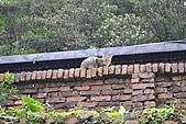 猴洞...貓村..貓:DSC_0040.JPG