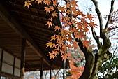 京都----楓紅...賞楓:DSC_0209.JPG