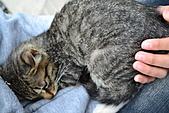 人與貓不可思議的邂逅:DSC_0183.JPG
