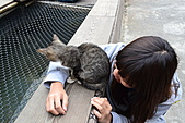 人與貓不可思議的邂逅:DSC_0165.JPG