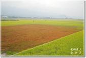 池上_浮圳 大觀亭 油菜花:DSC_7553.jpg
