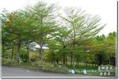 三義_鯉魚潭:DSC_8381.jpg