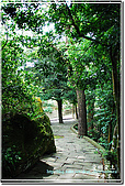 2010/4/17夢幻桐花步道:DSC_1986.jpg
