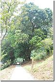 桃園大溪龍山寺:DSC_3064.jpg