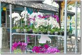 後壁_烏樹林休閒文化園區:DSC_7774.jpg