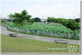 三重_疏洪荷花公園:DSC_2289.jpg