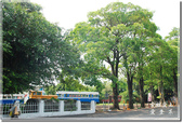 後壁_烏樹林休閒文化園區:DSC_7772.jpg