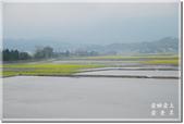 池上_浮圳 大觀亭 油菜花:DSC_7541.jpg