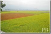 池上_浮圳 大觀亭 油菜花:DSC_7545.jpg