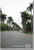 2010台大校園流蘇:DSC_1064.jpg