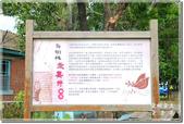 後壁_烏樹林休閒文化園區:DSC_7822.jpg